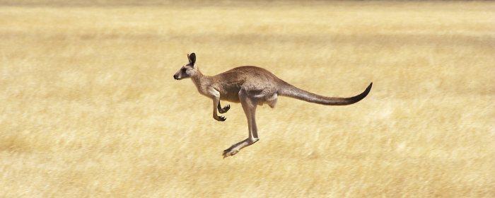 KangarooHopping01